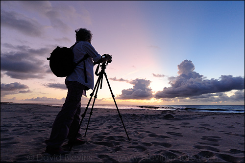 Kim photographing sea turtle tracks in the soft pastel light before dawn.   - David Blevins