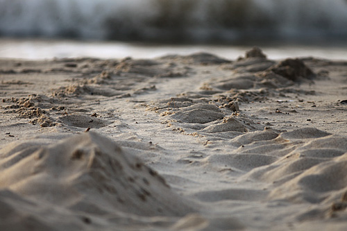 Sea Turtle Tracks.   - Janet Hilton